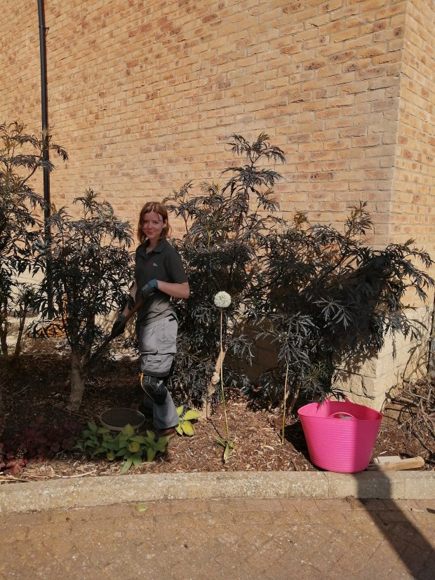 Staff member Molly looking after the gardens at Plaxton Court