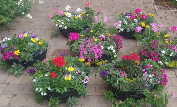 Photograph of Hanging Baskets
